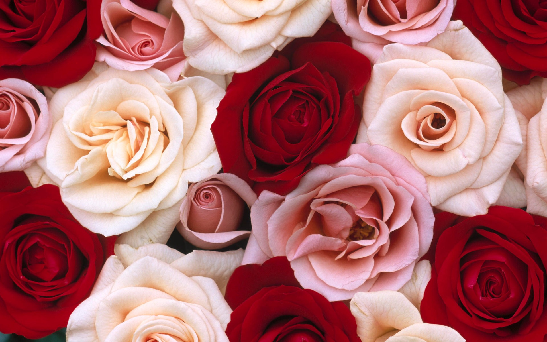 популярный картинки на рабочий стол цветы красивые розы только проснулся